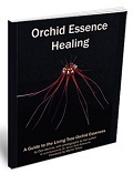 Orchid                         Essence Healing
