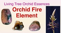 Orchid Fire Element